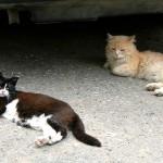 Бродячие кошки (Фото: Пеэтер ЛИЛЛЕВЯЛИ/АРХИВ)