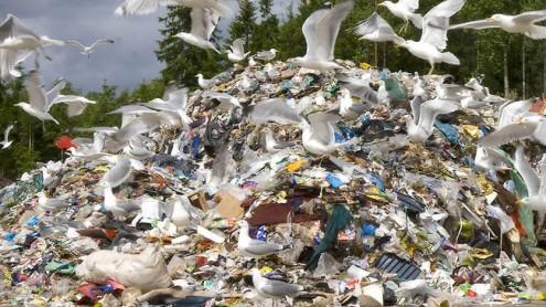 На Уйкалаской мусорной свалке.  Архивное фото, автор - Матти Кямяря