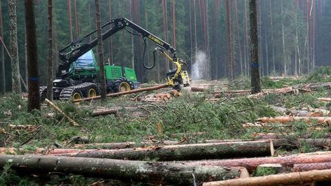 Вырубка леса (Фото: Матти КЯМЯРЯ/АРХИВ)