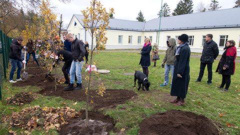 Десятый день рождения Силламяэского реабилитационного центра в 2015 году отметили посадкой деревьев.