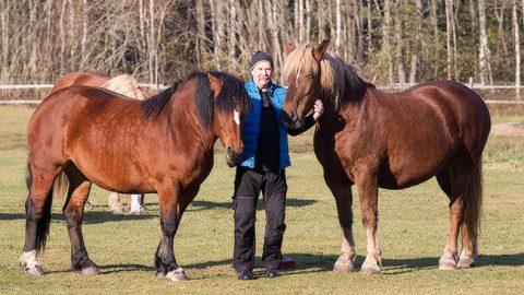 Лошади для хозяина не только сельскохозяйственный скот, но и любимые животные.