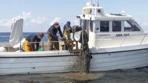 Ида-вирумааским инспекторам рыбнадзора в дальнейшем нечего будет делать на Чудском озере, их вотчиной останутся море и внутренние водоемы. (Фото: Инспекция окружающей среды)