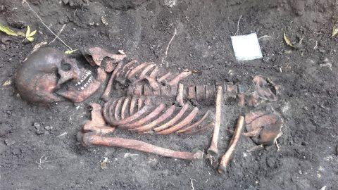 Скелет средневекового мужчины, рядом с которым нашли нож, очевидно, 13-го века. (Фото: Кристийна ПААВЕЛ)